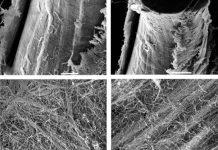 Wpływ mola magnetycznego na syntezę kolagenu