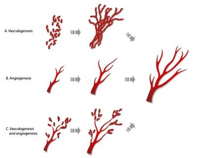 angiogenesis 400