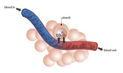oxygen partial pressure 400