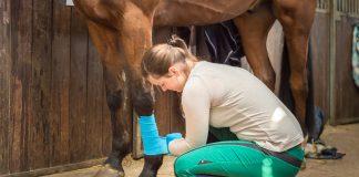 Leczenie ścięgna zginacza powierzchniowego u konia
