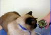 Zastosowanie dopplera u kota