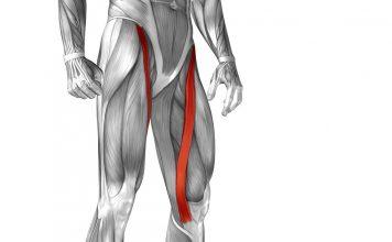 Naderwanie mięśnia krawieckiego