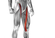 Sartorius muscle strain