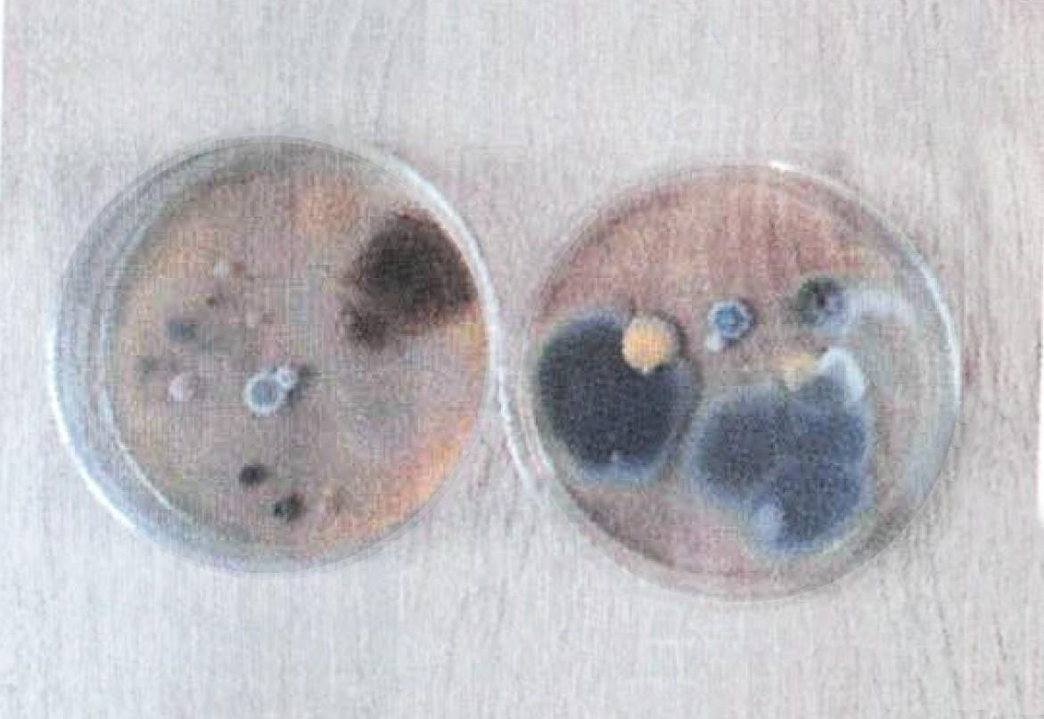 bakterie poddane działaniu lampy